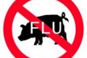 Свински грип H1N1 - Болести и лечение - здравето.com