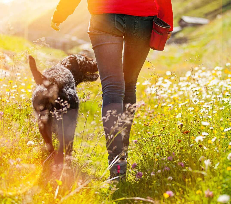 Ходете пеш, за да сте по-здрави!