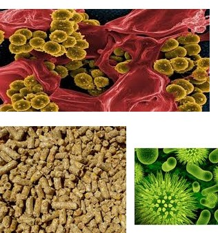 салмонелоза--болести-и-лечение-здравето.com